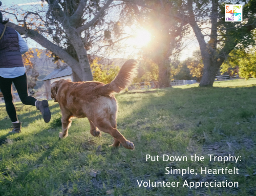 Put Down the Trophy: Simple, Heartfelt Volunteer Appreciation